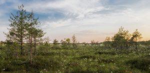 Estland<br /> Pixabay, rechtefrei